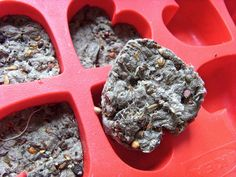 How to make your own seed bombs