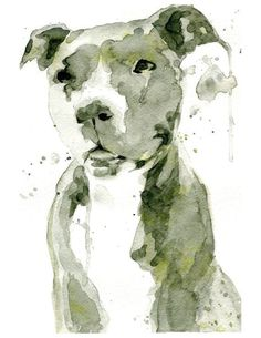 By PeripheryStudio on Etsy: Camo Pit Bull, Staffordshire Terrier, Staffie, watercolor painting, dog art Pitbull Tattoo, Bull Tattoos, Pitbull Terrier, Staffordshire Terrier, Dog Home Decor, Dog Paintings, Dog Art, Pet Portraits, Watercolor Paintings
