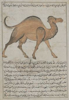 Camel (Ibil), from Aja'ib al-makhluqat (Wonders of Creation) by al-Qazvini | early 15th century | Opaque watercolor, ink, gold and silver on paper | Iraq or Eastern Turkey | Purchase | Freer Gallery of Art | F1954.87
