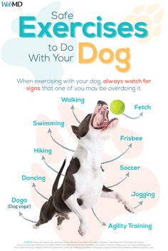 Do you — and your dog — struggle to get enough exercise 30 Day Cardio Challenge, Agility Training, Low Impact Workout, Dog Activities, Healthy Pets, Dog Runs, Dog Care, Workout Programs, Your Dog