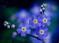 온라인팀 오경식을 위한 물망초    꽃말 : 나를 잊지 마세요        저 먼 오피시아로 떠났지만 똘망똘망한 그 눈동자를 잊지 않으며 물망초를 선물해드립니다.