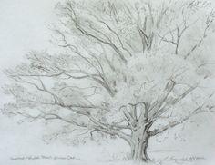 How to draw a tree, Lillian Kennedy –  tree drawing (weeklyartlesson.com)