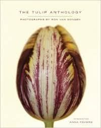 One of the best tulip photo books ever - Tulip Anthology made by Ron van Dongen - see the blog of TulipsinHolland.com