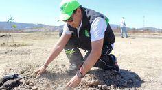 Con el objetivo de incrementar áreas verdes en espacios destinados para el deporte y la educación, el diputador del PVEM y los habitantes del ejido coordinaron las actividades para reforestar ...
