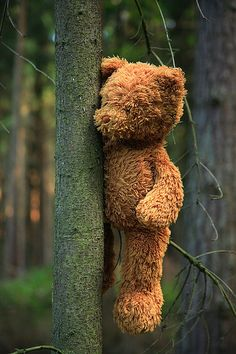 """""""If you go down in the woods today, you'd better go in disguise, for if you go down in the woods today, you're sure of a big surprise, 'cos every bear that ever there was, will be there today for certain because, today's the day the Teddy bears have their picnic"""""""