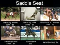 """The part that says """"what my trainer thinks I do"""" made me smile! So funny!! And true! Love saddle seat!!!"""