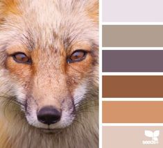 Fox color scheme