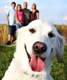 What's so furry? 25 Hilarious Animal Photobombs