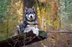 """Soon enough, we became know as """"Goldilocks and the Wolf""""."""