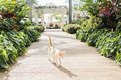 Aisle to Isle luxury-included destination wedding collections with Sandals Resorts. Cat Wedding, Wedding Day, Wedding Goals, Destination Wedding, Sandals South Coast, Wedding Honeymoons, Cool Cats, Resorts, Caribbean