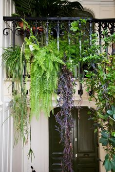 Parisian entryway filled with houseplants.