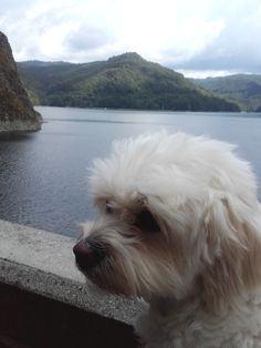 Come with me to: Vidraru Dam/ Barajul Vidraru – Corina Family Travel, Dogs, Animals, Family Trips, Animales, Animaux, Pet Dogs, Doggies, Animal