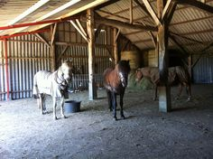 Group housing for horses. If you must stable do it this way.