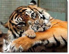 お母さぁぁぁーん! 美しき動物界の親子愛+/今すぐママンに会いたい!