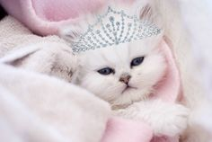 She's the queen of … everything! #sillypets