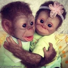 Baby Monkeys Are The Cutest Creatures Photos) - Funny Monkeys - Funny Monkeys meme - - Cheezburger Image 9070394112 The post Baby Monkeys Are The Cutest Creatures Photos) appeared first on Gag Dad. Funny Monkey Pictures, Baby Animals Pictures, Cute Animal Pictures, Random Pictures, Cute Baby Monkey, Pet Monkey, Cute Little Animals, Cute Funny Animals, Funny Monkeys