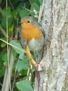 quilting Jeannet: Vecka Potpourri, Bird, Animals, Animales, Animaux, Bowl Fillers, Birds, Animal, Animais