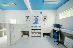 Dog Grooming Shop, Dog Grooming Salons, Dog Grooming Business, Dog Bathroom, Puppy Room, Dog Spaces, Pet Spa, Pet Hotel, Dog Salon