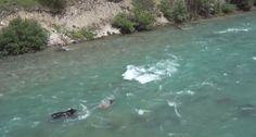 Elk Calf Attempts to Evade Wolf and Grizzly While Stranded in Canadian River
