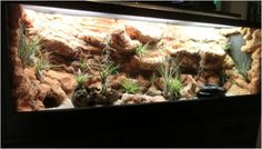 Issues With Keeping Lizards As Pets Bearded Dragon Enclosure, Bearded Dragon Cage, Snake Terrarium, Terrarium Diy, Paludarium, Vivarium, Reptiles, Lizards, Snakes