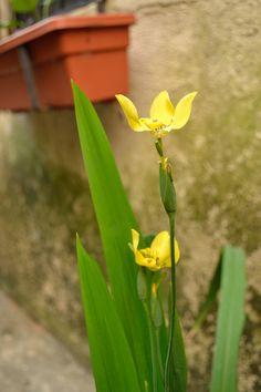 Primavera 2013