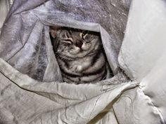 Pets Patinhas: Meu esconderijo Olha só minha felicidade!