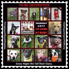 TO BE DESTROYED 06/08/17 - - Info   To rescue a Death Row Dog, Please read this:http://information.urgentpodr.org/adoption-info-and-list-of-rescues/  To view the full album, please click here:http://nycdogs.urgentpodr.org/tbd-dogs-page/ -  Click for info & Current Status: http://nycdogs.urgentpodr.org/to-be-destroyed-4915/