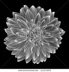 dahlia tattoo designs | black and white drawing of dahlia flower element for your design ...
