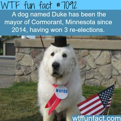 A wrestler governor, then I hear of a small child being mayor now a DOG? COME ON MINNESOTA REALLY