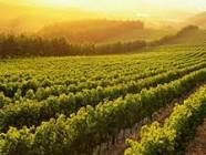 vinyard - Google Search