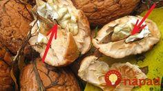 Škrupinky z orechov a tvrdé časti jadra nevyhadzujte. Poznáme skvelý spôsob, ako ich využiť!
