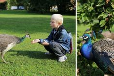 Feeding peacocks in Vojanovy sady, secret graden in the heart of Prague. Family travel Prague