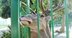 Симферопольский зоопарк (+видео)–Лента новостей Крыма - Новости сегодня -–