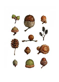 Acorns Watercolor Painting Print. $20.00, via Etsy.