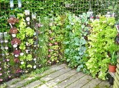 growing veg in containers | 2012 : And the result of growing vegetables and herbs in bottle towers ...