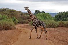 Unusual pattern of spots!  Arusha National Park, Tanzania  Arusha-park.jpg (929×622)