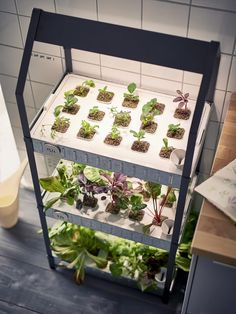 Hydroponic Gardening New from Ikea: A Hydroponic Countertop Garden Kit: Gardenista - With the introduction of Ikea's new Krydda/Växer Cultivation Kit, it's official: your countertop hydroponic garden is no longer a mere trend. The soil-free Aquaponics System, Hydroponic Farming, Hydroponic Growing, Growing Plants, Aquaponics Diy, Vertical Hydroponics, Indoor Hydroponics, Aquaponics Greenhouse, Vertical Farming