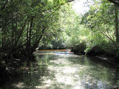 Along Econfina Creek. Credit: www.canoeeconfinacreek.net