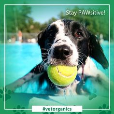 ✌🏻✌🏻✌🏻 pawsitive peeps are more pawsibly the happiest because they know the paws that refreshes, LOL.