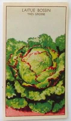 French Vegetable Seed Label, Laitue Bossin