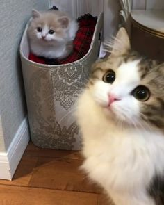 Via- Cats and Kittens Gallery #cats #cattoys #catowners