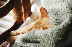 Image about photography in Cats! by M I M I on We Heart It Robins, Crazy Cat Lady, Crazy Cats, We Heart It, Cool Cats, Cats And Kittens, Corgi, Cute Animals, Creatures