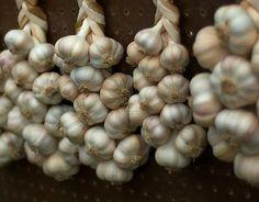 Knoblauch pflanzen: So bauen Sie die Knolle an | Heim & Garten