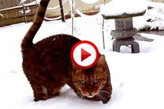 Cat experiences snow for first time   #videos, #videobox, #pinsland, #cats, #animals, #funny, https://apps.facebook.com/yangutu