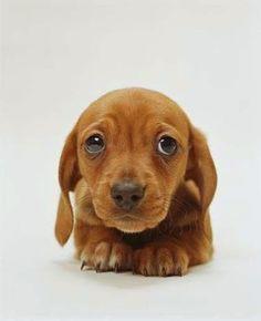 I Love all Dog Breeds: Top 5 Smallest dog breeds
