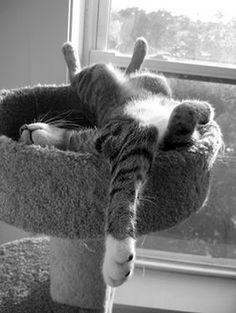 babinus:  La Pépère… Totally relaxed!