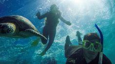 Snorkelling On The Great Barrier Reef With Tom and Crush - Life is Good #greatbarrierreef #cairns #turtle #eastcoast #catamaran #sailing #sailingboat #daytrip #snorkel #wonderlust #snorkelling #relationshipgoals #couples #ocean #sea #australia #travel #backpackers #gopro #potd #lovelife #travelgram @heads07 by hannahlouiserobertsx http://ift.tt/1UokkV2