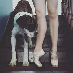 #CapezioAthlete Talia Fidra shows off her gorgeous Hanami ballet slippers with puppy Kaiser! Do you dance with your furry friend?