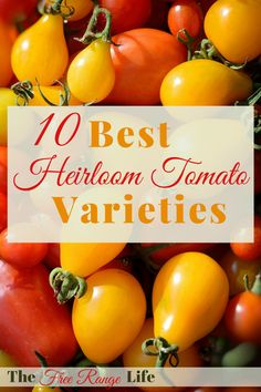 Tomatoes Gardening For Beginners When it comes to heirloom tomato varieties you have a lot to choose from! Here are 10 of my favorite heirloom tomato varieties for you to try this year! Growing Tomatoes From Seed, Growing Tomatoes In Containers, Growing Vegetables, Grow Tomatoes, Baby Tomatoes, Planting Vegetables, Roasted Tomatoes, Cherry Tomatoes, Tomato Garden
