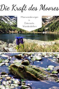 Wir erzählen über die Entstehung und die gesunde Wirkung eines Moores sowie Tipps und ausgewählte Routen zu Moorlandschaften in Österreich.   #moor #wandern #österreich #gesundheit #natur #berge #wanderwege #wanderninösterreich #wanderuralub #ausflugsziele #ausfluginösterreich #urlaubinösterreich Places, Nature, Animals, Hiking Trails, Road Trip Destinations, Mountains, Landscape, Health, Tips
